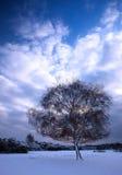 Boom op de winterdag Stock Afbeeldingen