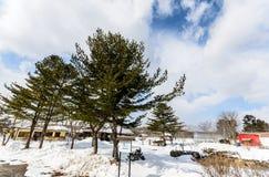 Boom op de Winterlandschap en Blauwe Hemel Stock Foto's
