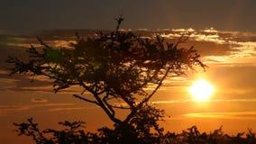 Boom op een achtergrond van zonsopgang stock footage