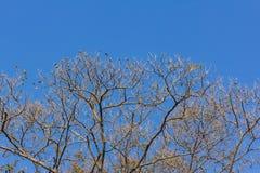 Boom op een blauwe hemelachtergrond Stock Fotografie