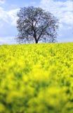Boom op een gebied van bloemen Royalty-vrije Stock Afbeeldingen
