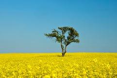 Boom op een gouden tarwegebied Stock Foto's