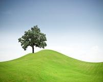 Boom op een groene grasheuvel   stock foto's