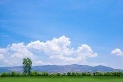 Boom op een groene grasheuvel Stock Fotografie