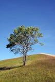 Boom op een heuvel Stock Afbeelding