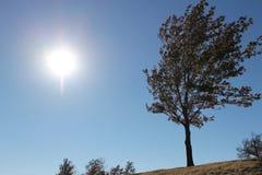 Boom op een heuvel in de zon Royalty-vrije Stock Fotografie