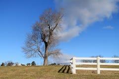 Boom op een heuveltop Stock Fotografie