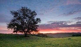 Boom op een heuveltop met de achtergrond van de zonsonderganghemel Royalty-vrije Stock Foto