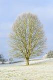 Boom op een ijzige de winterdag stock foto