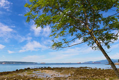 Boom op een strand tijdens eb tegen blauwe hemel met wolken Royalty-vrije Stock Foto's