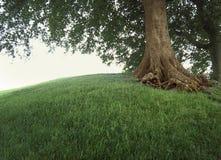 Boom op grasrijke heuvel. stock afbeelding