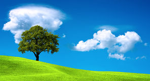 Boom op groen gebied Stock Afbeelding