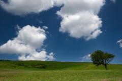 Boom op groen gebied stock foto's