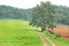 Boom op groen grasgebied, weg in landbouwbedrijf. Royalty-vrije Stock Fotografie