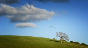Boom op groene gebied en vogels Royalty-vrije Stock Foto's