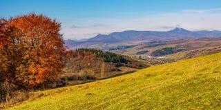 Boom op helling in bergachtig de herfstplatteland Stock Afbeeldingen