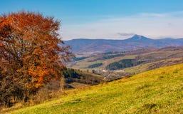 Boom op helling in bergachtig de herfstplatteland Stock Foto