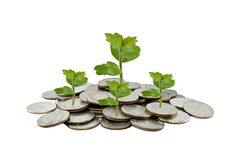 Boom op het concept van de geldgroei in zaken, Muntstukken op witte backgro Stock Foto