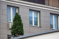 Boom op het dak, het modelleren, natuurbescherming altijdgroen decoratie van stedelijke landschappen stock foto