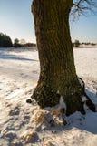 boom op het gebied Stock Afbeeldingen