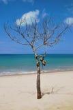 Boom op het strand Stock Foto