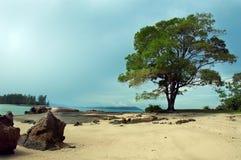Boom op het strand Royalty-vrije Stock Afbeeldingen