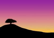 Boom op heuvel tijdens zonsondergang Royalty-vrije Stock Foto's