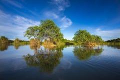 Boom op meer tropisch land Royalty-vrije Stock Foto