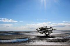 Boom op mudflats stock foto's