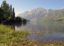 Boom op oever van het meer Stock Foto