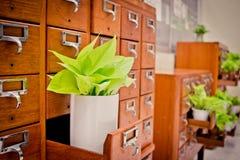 Boom op Open houten kabinetsdozen in Bibliotheek of het Indienen archief r royalty-vrije stock foto
