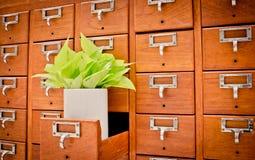 Boom op Open houten kabinetsdozen in Bibliotheek of het Indienen archief r Stock Afbeeldingen