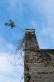 Boom op oude baksteenschoorsteen en blauwe hemel Royalty-vrije Stock Afbeelding