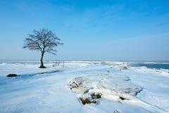 Boom op sneeuw Stock Foto