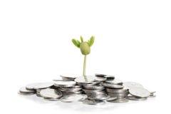 Boom op stapel van muntstukken op wit Royalty-vrije Stock Foto's