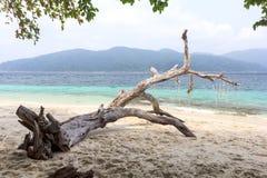 Boom op strand Royalty-vrije Stock Foto's