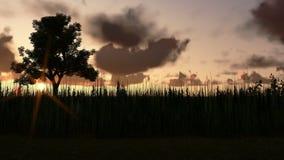 Boom op weide bij zonsondergang, de wolken van de tijdtijdspanne stock illustratie