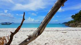 Boom op Wit hemelstrand het Pinkstereneiland in Australië royalty-vrije stock afbeelding