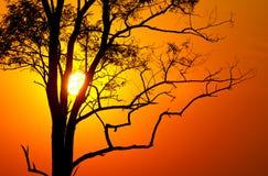 Boom op zonsondergang stock foto