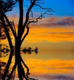 Boom op zonsondergang stock fotografie