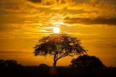 Boom op zonsondergang Royalty-vrije Stock Foto