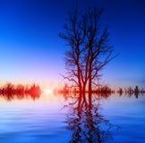 Boom op zonsondergang achtergrondhemel royalty-vrije stock afbeeldingen