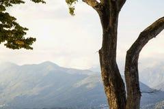 Boom over bergenlandschap royalty-vrije stock afbeelding