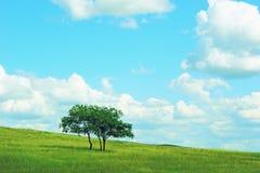 Boom in panoramisch platteland stock afbeelding