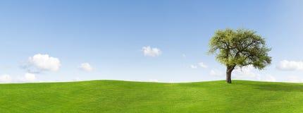 Boom in panoramisch platteland Royalty-vrije Stock Afbeelding