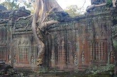 Boom in Preah Khan stock foto's