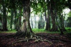 Boom in Regenwoud royalty-vrije stock afbeelding