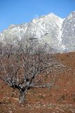 Boom in Sierra DE Gredos Royalty-vrije Stock Afbeelding