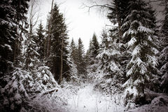 Boom in sneeuw Royalty-vrije Stock Fotografie