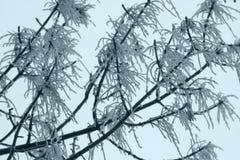 Boom in sneeuw Royalty-vrije Stock Foto's